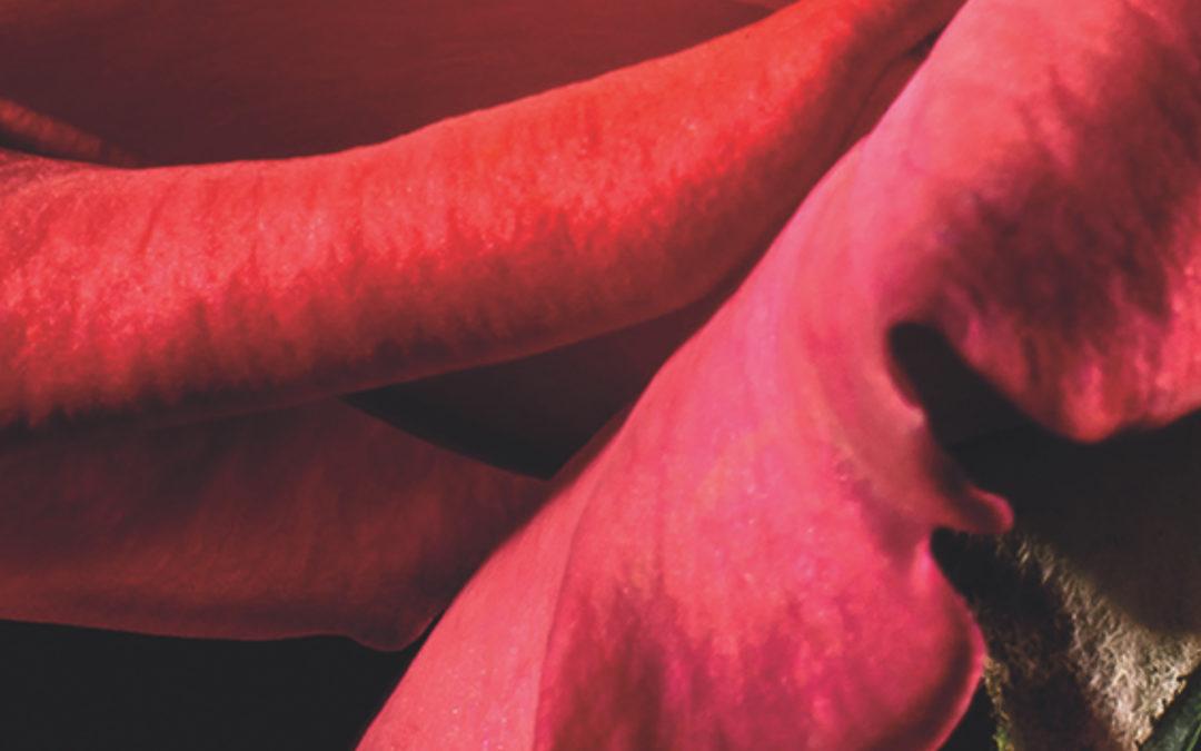 Rose Poivrée, le contraste des contraires